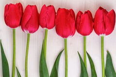 Red Tulips Straight Line Wooden Background Royalty Free Stock Image