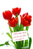 Red tulips in sunlight isolated on white for mom Stock Image