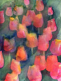 Red Tulips Texture Stock Image