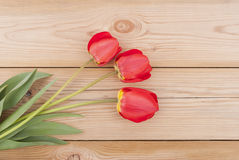 Red tulips. Royalty Free Stock Image