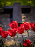 Red tulips and tomb Royalty Free Stock Photos