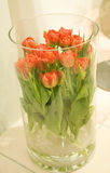 Red tulips in a vase Royalty Free Stock Photo