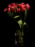 Red tulips in the vase. Photo of red tulips in the vase on black background stock photos