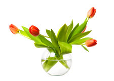 Red tulips in a vase Royalty Free Stock Image