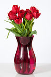 Red Tulips in Vase on White Stock Image