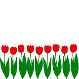 Red tulips. Vector illustration. Red tulips on a white background. Vector illustration Royalty Free Stock Image