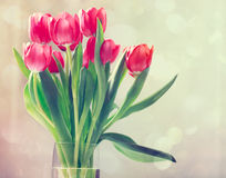 Red tulips in vintage style Royalty Free Stock Photos