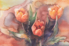 Red tulips watercolor. Red tulips bouquet on red background hand made watercolor Stock Image