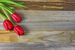 Red tulips on weathered wood Royalty Free Stock Photo