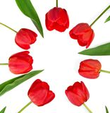 The red tulips which put in a circle Stock Image