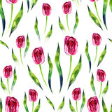 Red tulips on the white background. Watercolor seamless pattern. Royalty Free Stock Image