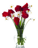 Red tulips and white narcissuses Royalty Free Stock Image