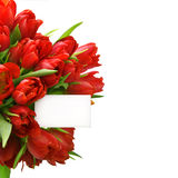 Red tulips with white paper card Stock Photography