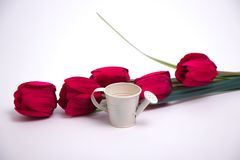 Red tulips and a white watering can stock images