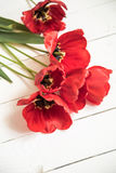 Red tulips on white wooden background Royalty Free Stock Photography