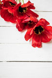 Red tulips on white wooden background Stock Photos