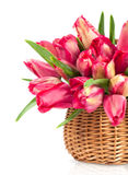Red tulips in a wicker basket Stock Photos