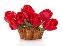 Red tulips in the wicker basket Royalty Free Stock Photography
