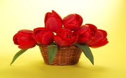 Red tulips in the wicker basketon Stock Images