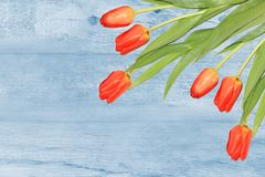 Red tulips on wooden background Royalty Free Stock Image