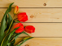 Red tulips on wooden background Royalty Free Stock Images