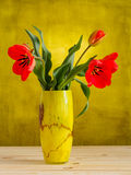 Red tulips in yellow vase Stock Image