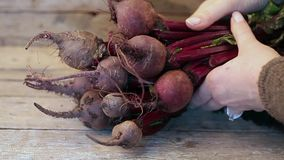 Red Turnips stock footage
