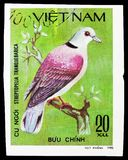 Red Turtle-dove (Streptopelia tranquebarica), Doves serie, circa 1981. MOSCOW, RUSSIA - SEPTEMBER 26, 2018: A stamp printed in Vietnam shows Red Turtle-dove ( stock photo