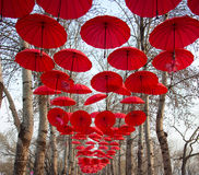 Red Umbrella. The red umbrellas hanging in trees Stock Photography