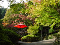 Red Umbrella in Autumn Park in Japan. A red umbrella sits in an autumn park in Kyoto, Japan. The umbrella is red, and glows from the afternoon sun Stock Photos