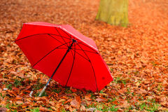 Red umbrella in autumn park on leaves carpet. Stock Photos