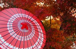 Red Umbrella in fall Season. A red traditional japanese umbrella with fall color leaves in the background Stock Photography