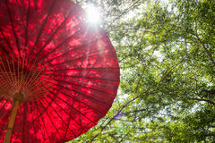 Red Umbrella In Garden Resort Royalty Free Stock Photos