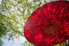 Red Umbrella In Garden Resort Royalty Free Stock Photography