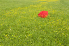 Red umbrella in a green field Stock Photos