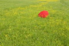 Red umbrella in a green field Stock Photos