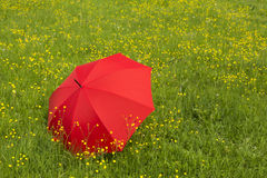 Red umbrella in a green field Stock Photography