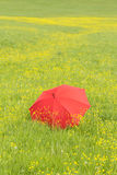 Red umbrella in a green field Stock Image