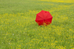 Red umbrella in a green field Royalty Free Stock Image