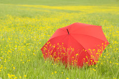 Red umbrella in a green field Royalty Free Stock Photos