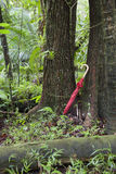 Red umbrella leaning against tree in rainforest Stock Image