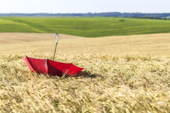 Red umbrella on wheat field. Ears of golden wheat close up. Beau. Tiful Nature Landscape. Rural Scenery under Shining Sunlight. Rich harvest Concept Stock Photography