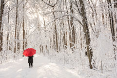 Red Umbrella Winter Walk Stock Images