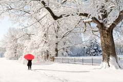 Red Umbrella Winter Walk Royalty Free Stock Images