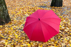 Red umbrella on yellow leaves Stock Photo