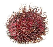 Red unpeeled rambutan fruit isolated on white background. Ripe red unpeeled rambutan fruit isolated on white background Stock Photo