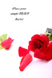 Red valentine rose. Beautiful valentien roses and place for sample text Royalty Free Stock Images