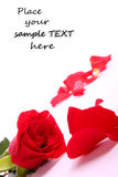 Red valentine rose. Beautiful valentien roses and place for sample text Stock Images