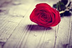 Red valentine rose. On wooden background concept for love, valentine`s day, romance, thank you, celebration or anniversary royalty free stock photos