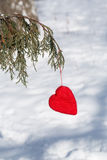 Red Valentines Day Heart Hanging In Pine Tree Vertical Royalty Free Stock Image